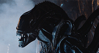 Warrior Alien, a common type of Xenomorph